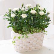 Cream Rose Basket