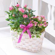 Happy Birthday Pink Rose and Kalanchoe Basket