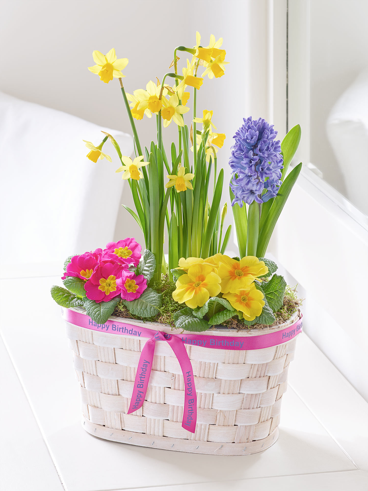 Happy Birthday Spring Planted Basket Sweeneys Florist
