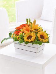 lily_germini_and_sunflower_arrangement